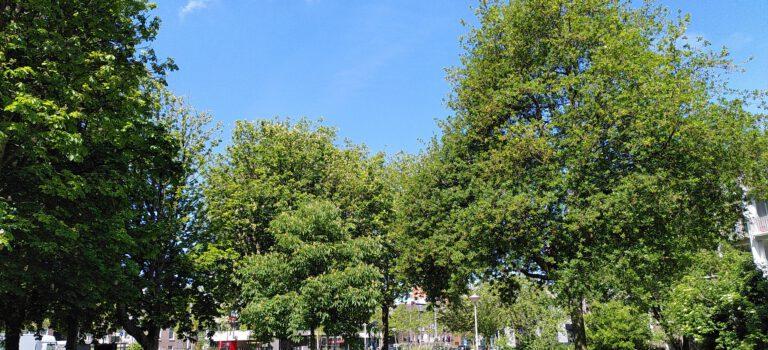 Bomen in Amsterdam